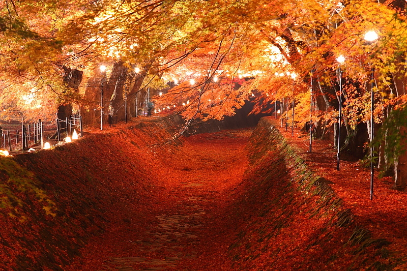 駆け回りたいほど豪華な紅葉。